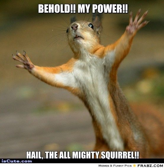 Behold my power hail the all Squirrel Memes
